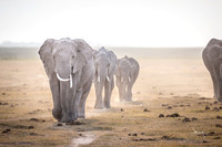 This Endless March. Amboseli. Kenya